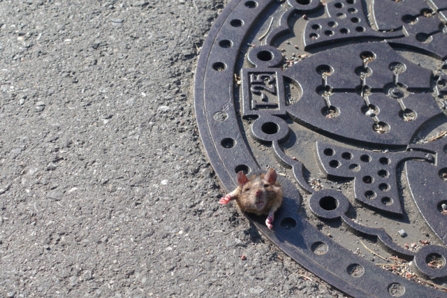 もがくネズミちゃん。一連のシリーズになっていて、最終的に脱出成功とのこと。