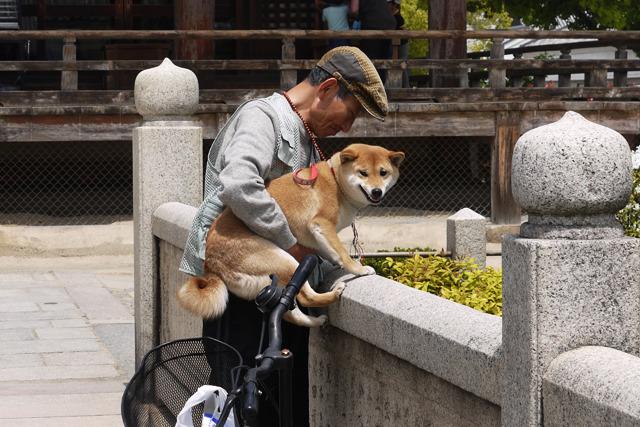 犬の表情、この瞬間を撮るのはなかなか難しいと思う。しかもカメラ目線だ。