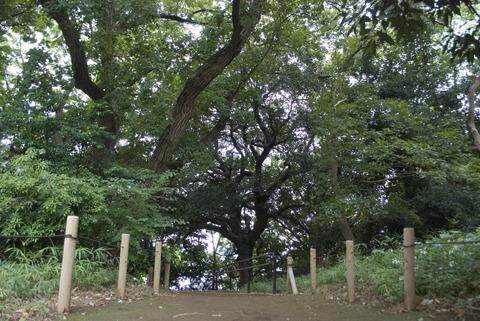古代人の墓場の周囲を生命力みなぎる木々が取り囲むパワースポット