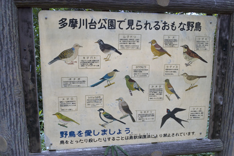 たとえば野鳥を愛すること。これもおじいさん的趣味の代表格といえよう