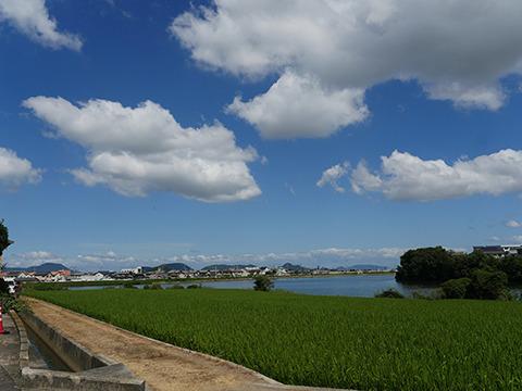 香川県は雨がふらなくて川も少ないのでため池が多いらしい