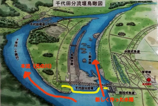 掲示物より。黄色い線のところが写真の堰(千代田分流堰)。増水時にはゲートを開いて新水路に水を通し、洪水への対策とする。