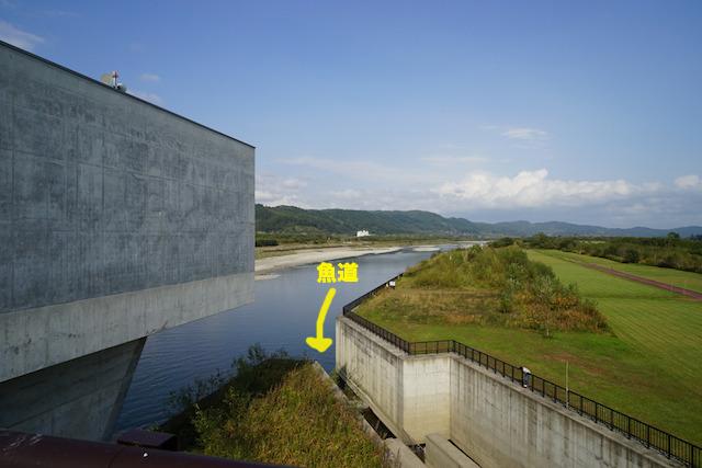 新水路の脇に設けられた魚道。