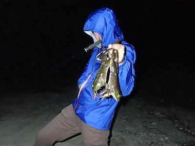 コツさえつかめば手づかみで捕れるぜ。カエルに限らず、動物に触ったら必ず手を洗おうね。