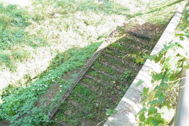 草むした階段