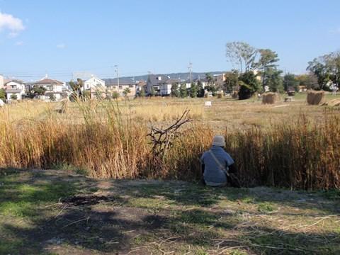 復元水田を眺めながら食事する人も。