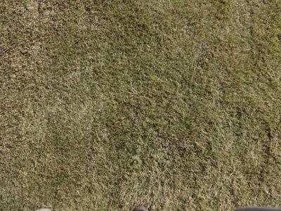 あこがれの地面。ふかふかの芝生。