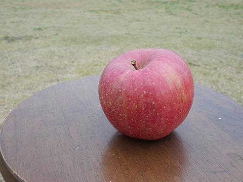 リンゴは悪くない