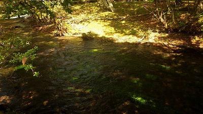 その中禅寺湖へ流れ込む河川には、この時季になると多数のマスが産卵のために遡上するらしい。それを見るため、東京出張の合間を縫ってやってきたのだ。