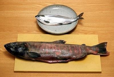 かなり見た目が異なる。種レベルで違う魚なのだから当然と言えば当然だが、どちらも同じ湖に暮らす小型のマス類である。サイズや体色は成熟の度合によるところも大きい。