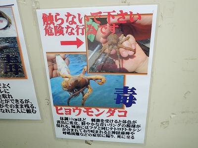 ※ヒョウモンダコに噛まれると命に関わる重篤な症状を引き起こします。決して安易に触らないでください。