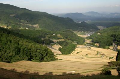 今回の旅行で訪れた棚田では、日本一高い石積の「蕨野の棚田」や――