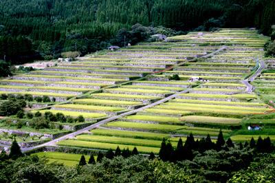 直線的な石積が特徴的な、「坂元棚田」なども面白かった