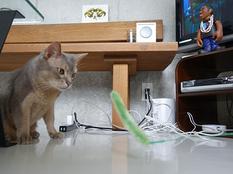 猫のリオくんが猫じゃらしをいじる度にチャンネルが変わっていく
