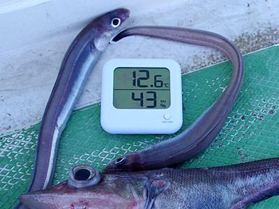 すぐに10度の壁を突破。釣れるのは謎多き深海魚。