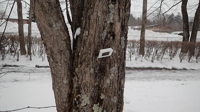 計測は木に任せた。