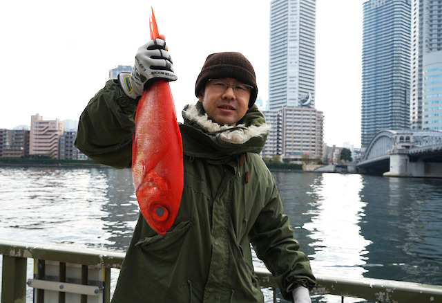 じゃん、40cmオーバー、1.5kgの金目鯛です!