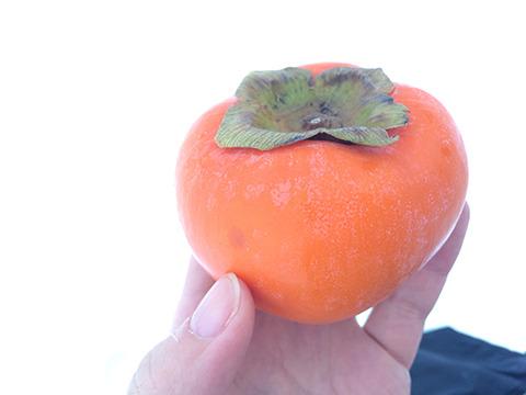 スーパーで買った富有柿。うまそうだ。外でなければ。