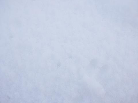 後世に唐辛子に雪レシピを伝えるべく、まずはふわふわの雪の層にたどりつくこと