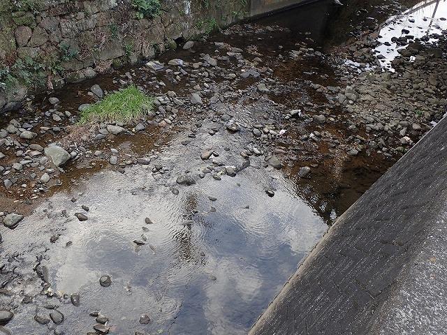 こんな感じの川を河口側から遡って捜索する。