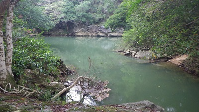 オウナギは沖縄の川なら意外とどこにでもいる。