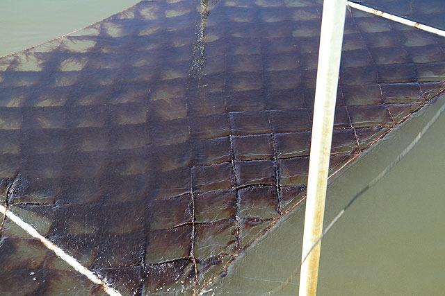 この網にくっついているのが海苔。