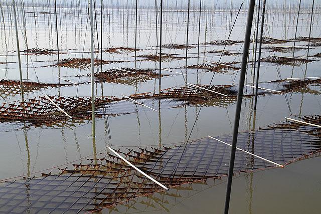 潮が引いてくると網が海から上がり日に当たるようになる。