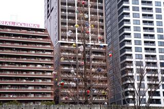 木に紙風船のようなものがいっぱい飾ってあった
