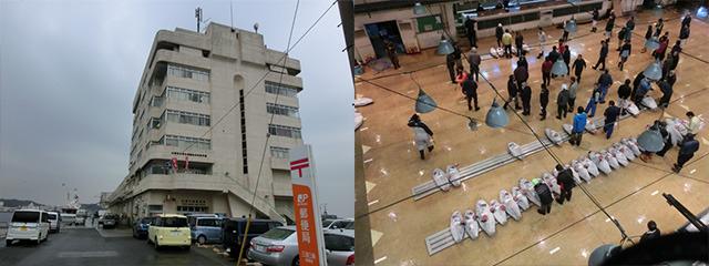 三浦市三崎水産物地方卸売市場でマグロの競りを見学