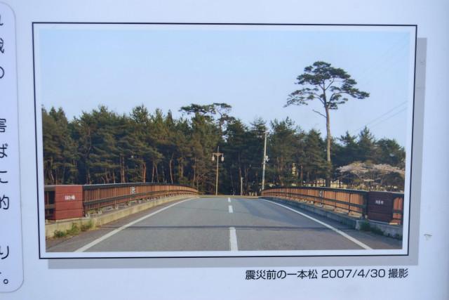 震災前の一本松の様子をとらえた貴重な写真