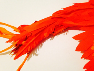 火の鳥の尾羽。繊細!