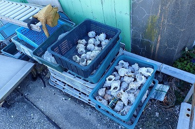 港のあちこちには大量のサザエの殻が。