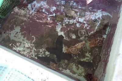 ナマコ、貝類のほか、魚やイカ、イセエビなどさまざまな魚介類が良好な状態でストックされている。