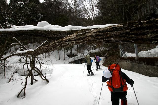 道の至る所で木が倒れているのである