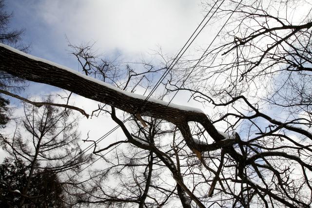 電線に引っかかっている倒木も。こりゃ送電できないワケですな
