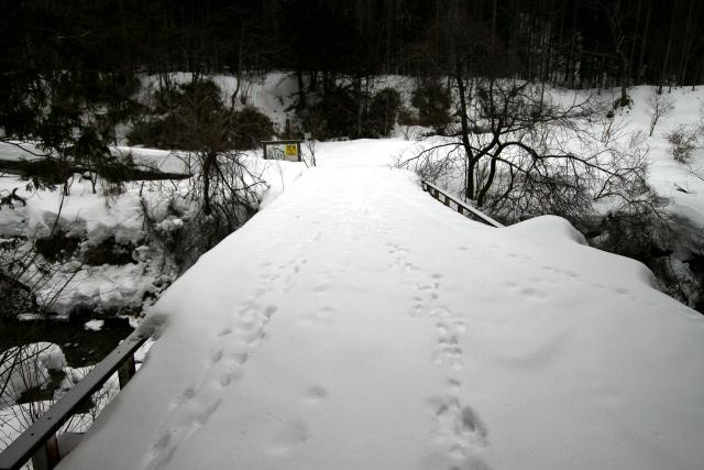 動物も橋を渡るのだろう、たくさんの足跡がついていた