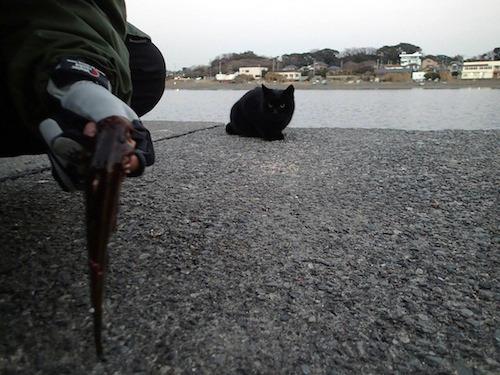 三浦ではゴンズイしか釣れないし、猫に見られるし。