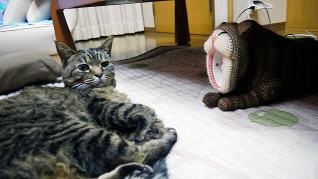 猫型湯たんぽつくりました(写真右)