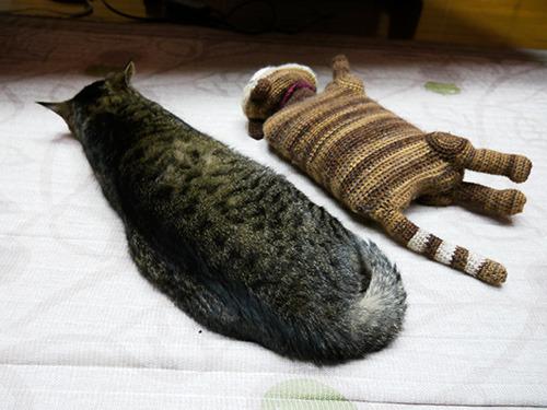 しばらく横に置いといたが、あまりの興味のなさに途中から寝てしまったおばあちゃん猫