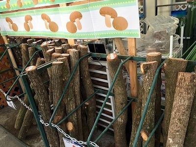 シイタケのホダ木にはクヌギやコナラ、クリなどがよく用いられる。