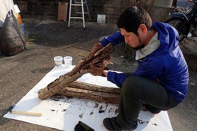 まずは手で樹皮を剥がして、隙間に潜り込んでいる虫をチェック。