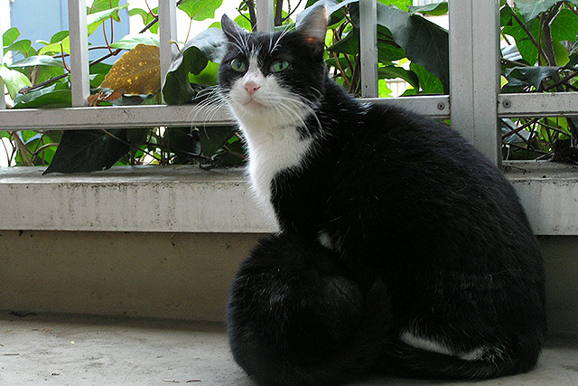 ちなみに、なつめさん(我が家の第1飼い猫)の母親である。腹のとこにいる黒い塊がなつめさんだ。