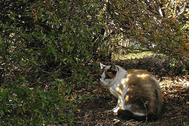 茂みに隠れるアサリ。