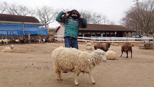 ということで、羊をサラサラにします!