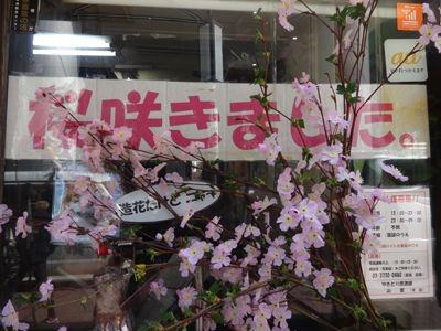 「桜咲きました」というディスプレイがあったので入ってみました。