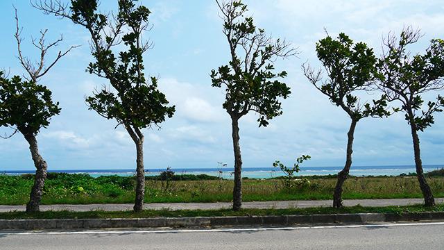 時折見える青い海がここは沖縄と思い出させてくれる