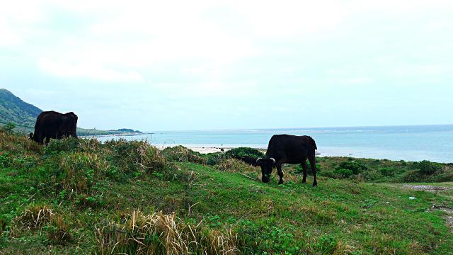 牛がチラホラ現れてきた!