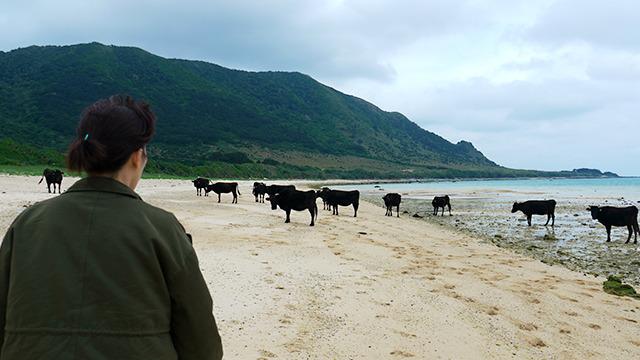 一定の距離をおきたいらしい牛達。可愛い。