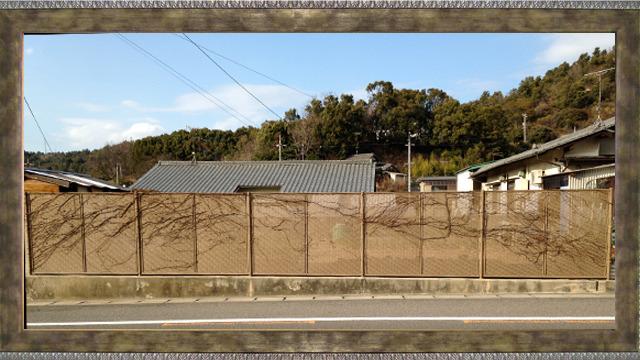 『枯木屏風』作者:枯れた草 京都智積院の宿坊に泊まったときに観た国宝「松に秋草図屏風」にも劣らぬ造形美!(にわたしの目には映る)。コーフンして何度もシャッターを押した。