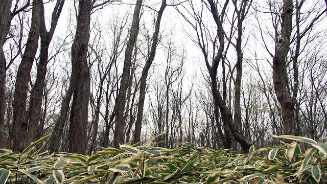 武蔵野の面影を探す旅です